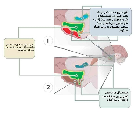 تغییرات ایجاد شده در مغز با تأثیر سریع مواد